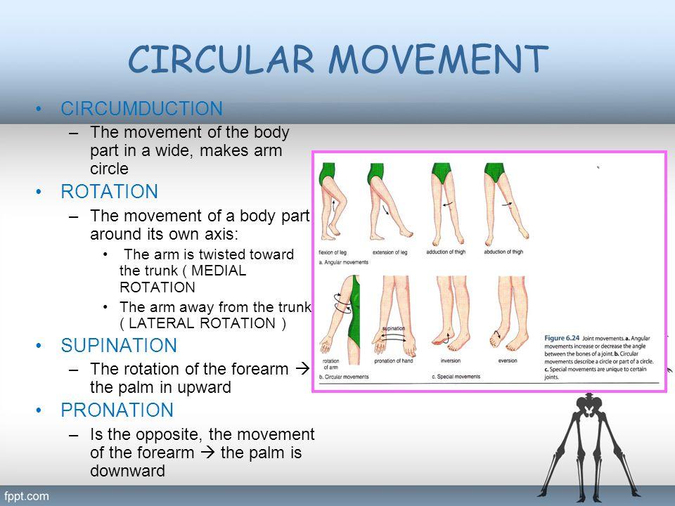 CIRCULAR MOVEMENT CIRCUMDUCTION ROTATION SUPINATION PRONATION