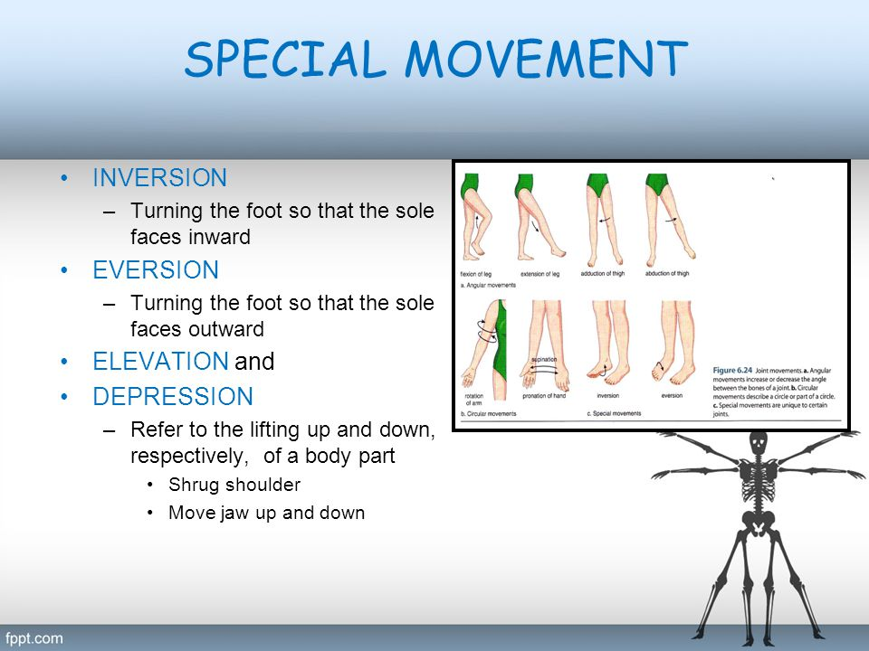 SPECIAL MOVEMENT INVERSION EVERSION ELEVATION and DEPRESSION