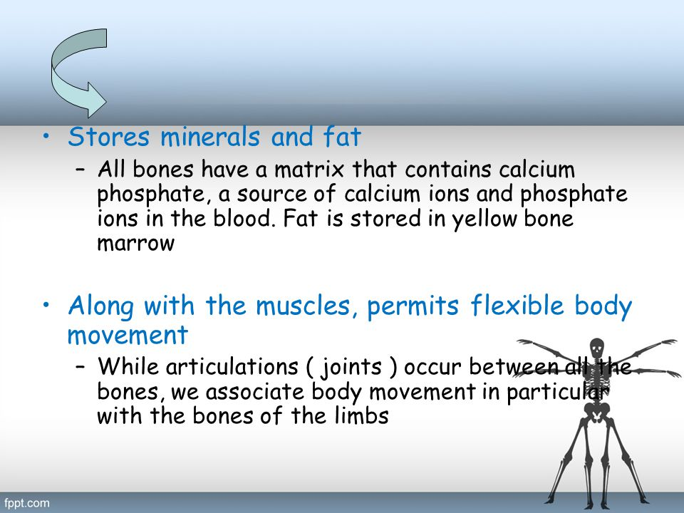 Stores minerals and fat