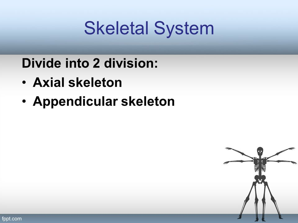 Skeletal System Divide into 2 division: Axial skeleton