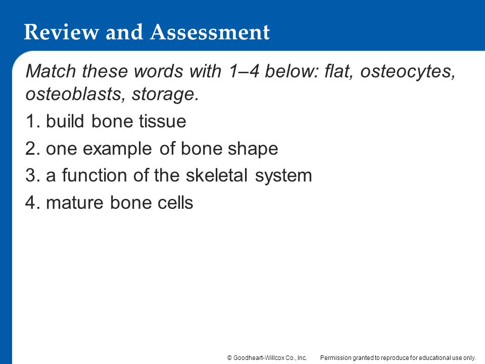 Review and Assessment Match these words with 1–4 below: flat, osteocytes, osteoblasts, storage. 1. build bone tissue.