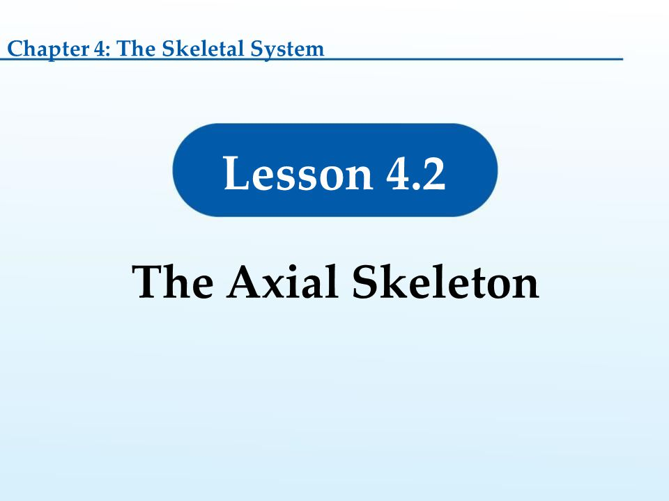 Chapter 4: The Skeletal System