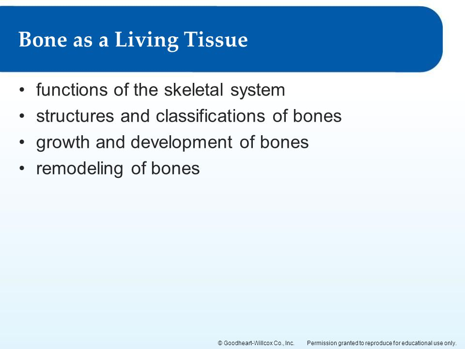 Bone as a Living Tissue functions of the skeletal system