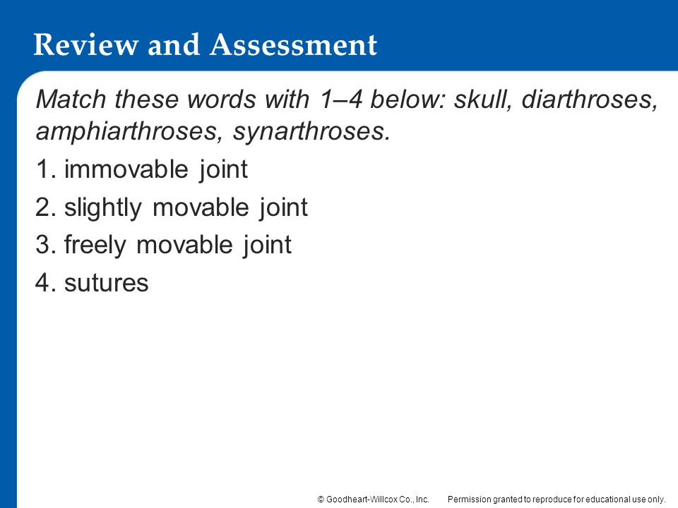 Review and Assessment Match these words with 1–4 below: skull, diarthroses, amphiarthroses, synarthroses.