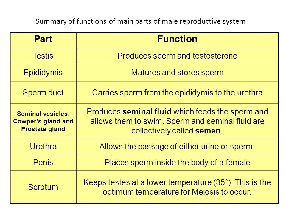 role of testosterone in women