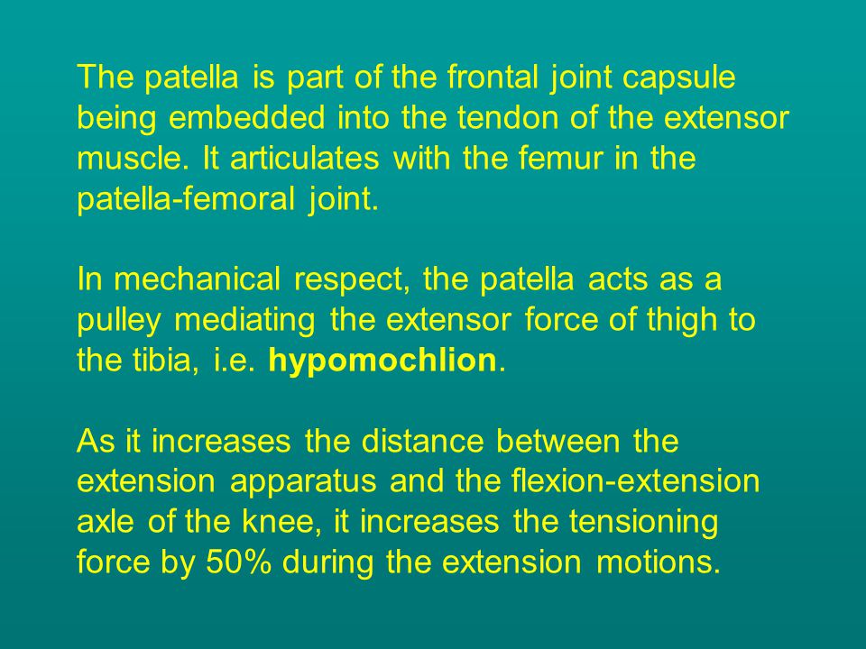 The patella is part of the frontal joint capsule being embedded into the tendon of the extensor muscle.