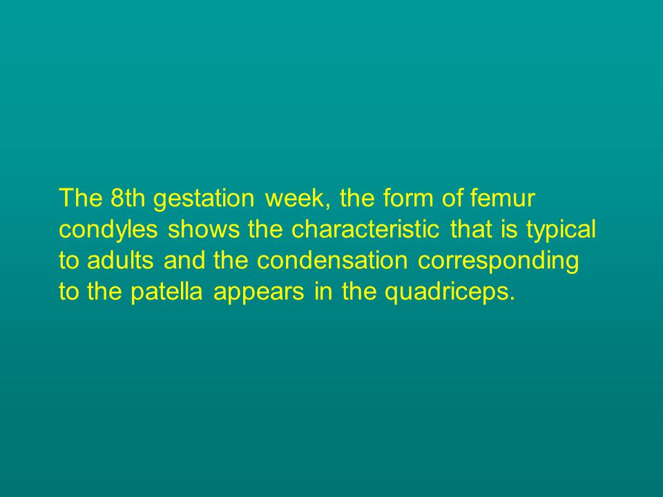 The 8th gestation week, the form of femur condyles shows the characteristic that is typical to adults and the condensation corresponding to the patella appears in the quadriceps.