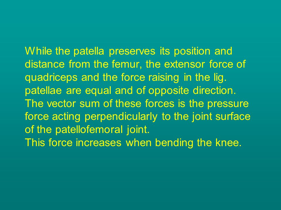 While the patella preserves its position and distance from the femur, the extensor force of quadriceps and the force raising in the lig.