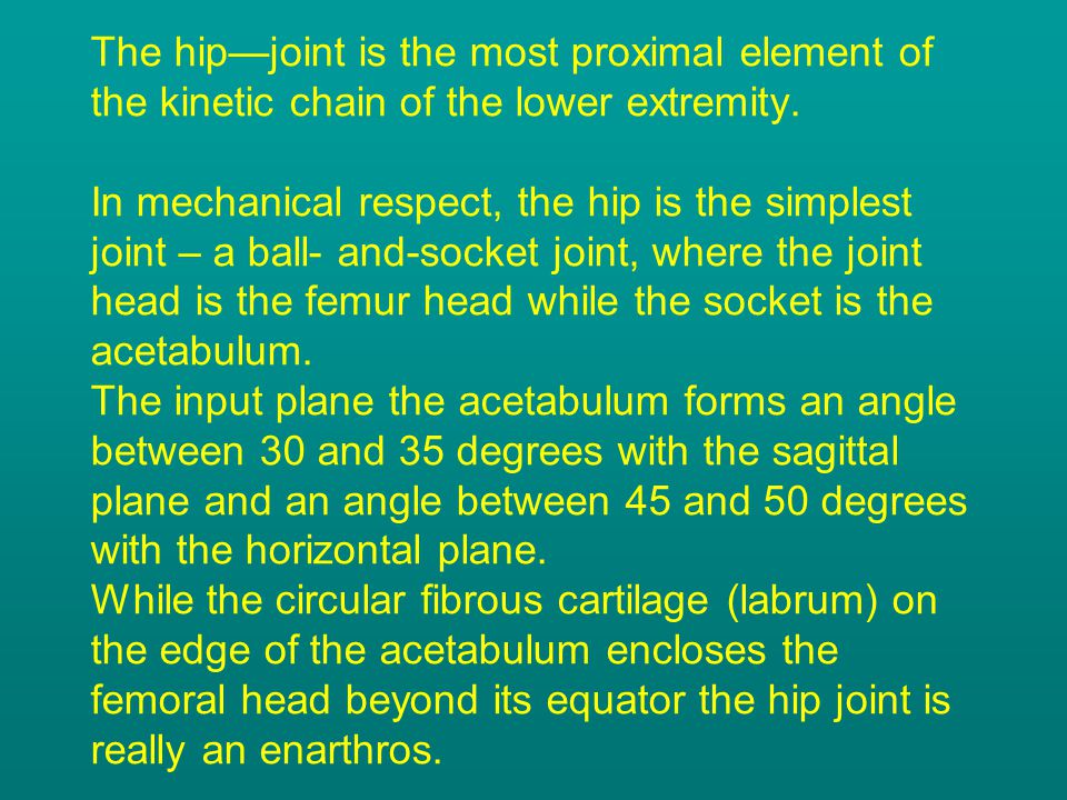 The hip—joint is the most proximal element of the kinetic chain of the lower extremity.