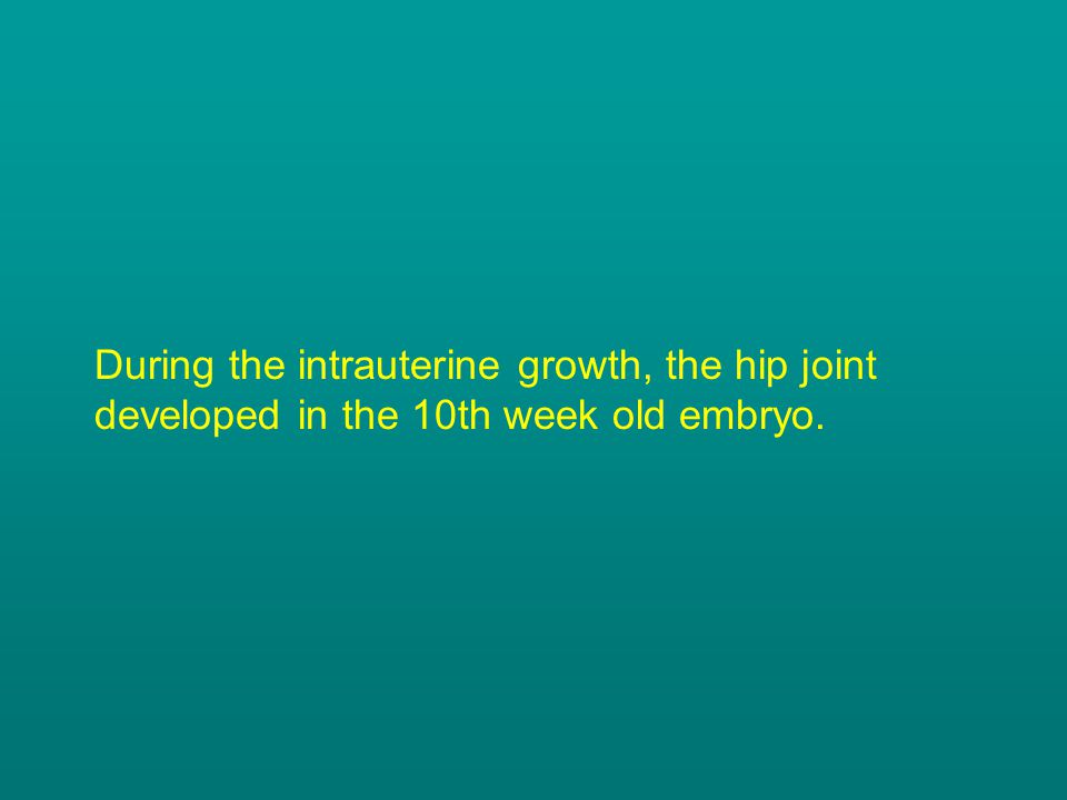During the intrauterine growth, the hip joint developed in the 10th week old embryo.