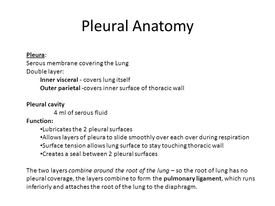 Pleural Anatomy Pleura: Serous membrane covering the Lung