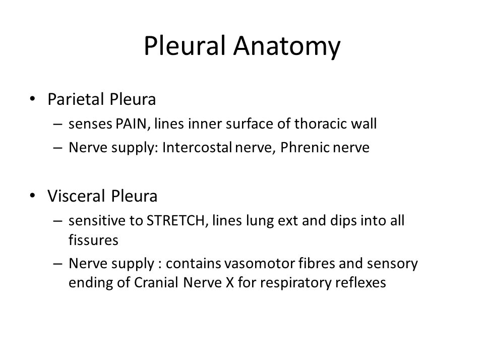 Pleural Anatomy Parietal Pleura Visceral Pleura