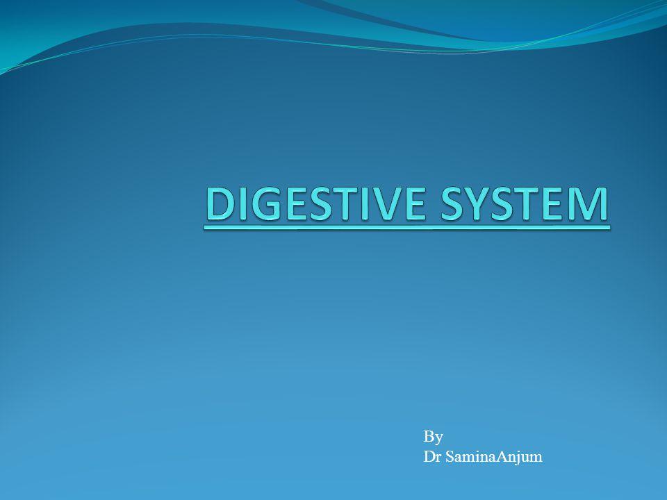 DIGESTIVE SYSTEM By Dr SaminaAnjum