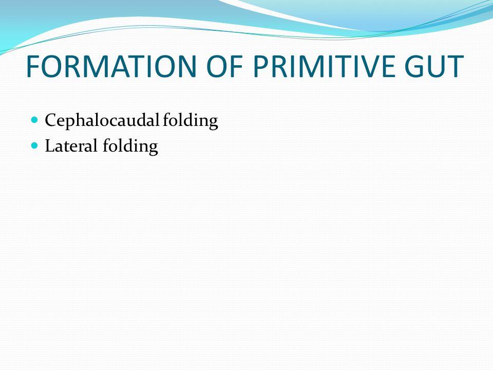 FORMATION OF PRIMITIVE GUT