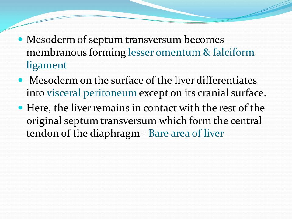 Mesoderm of septum transversum becomes membranous forming lesser omentum & falciform ligament
