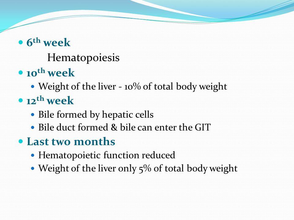 6th week Hematopoiesis 10th week 12th week Last two months