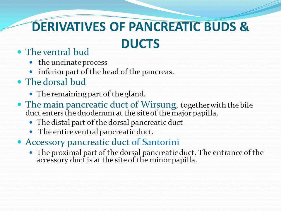 DERIVATIVES OF PANCREATIC BUDS & DUCTS