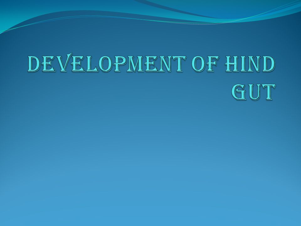 DEVELOPMENT OF HIND GUT