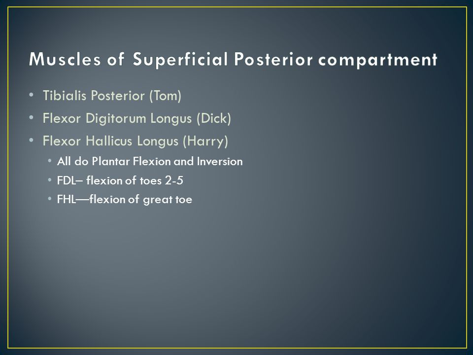 Muscles of Superficial Posterior compartment