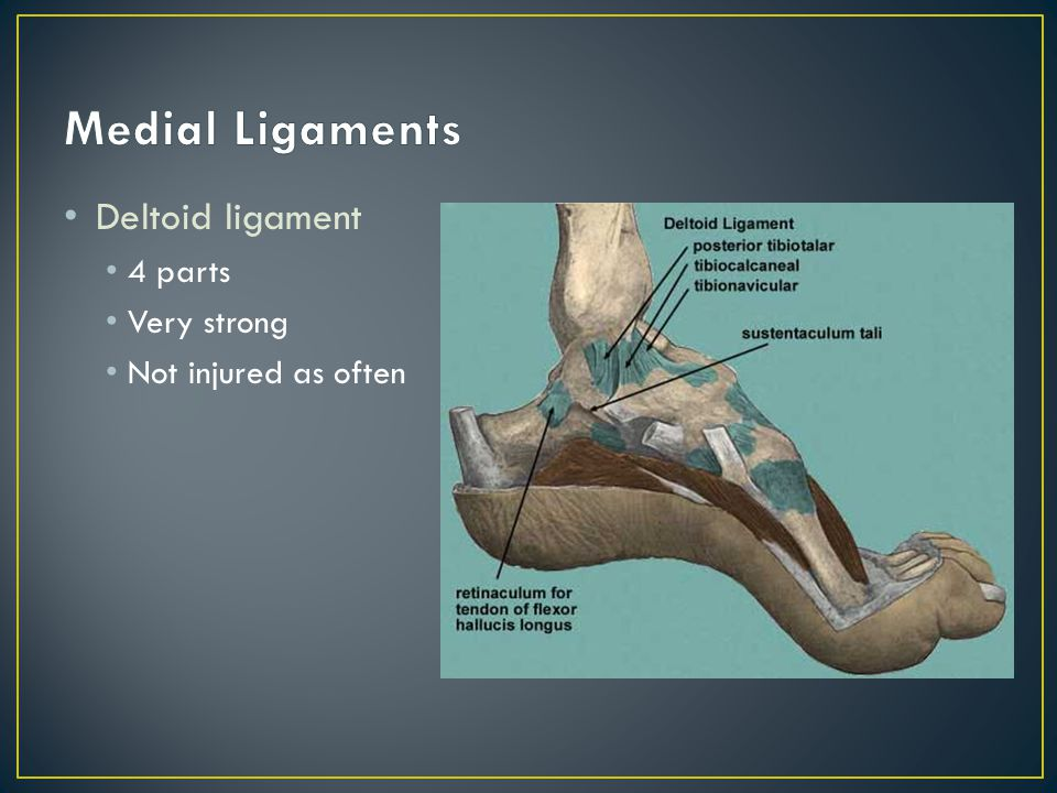 Medial Ligaments Deltoid ligament 4 parts Very strong