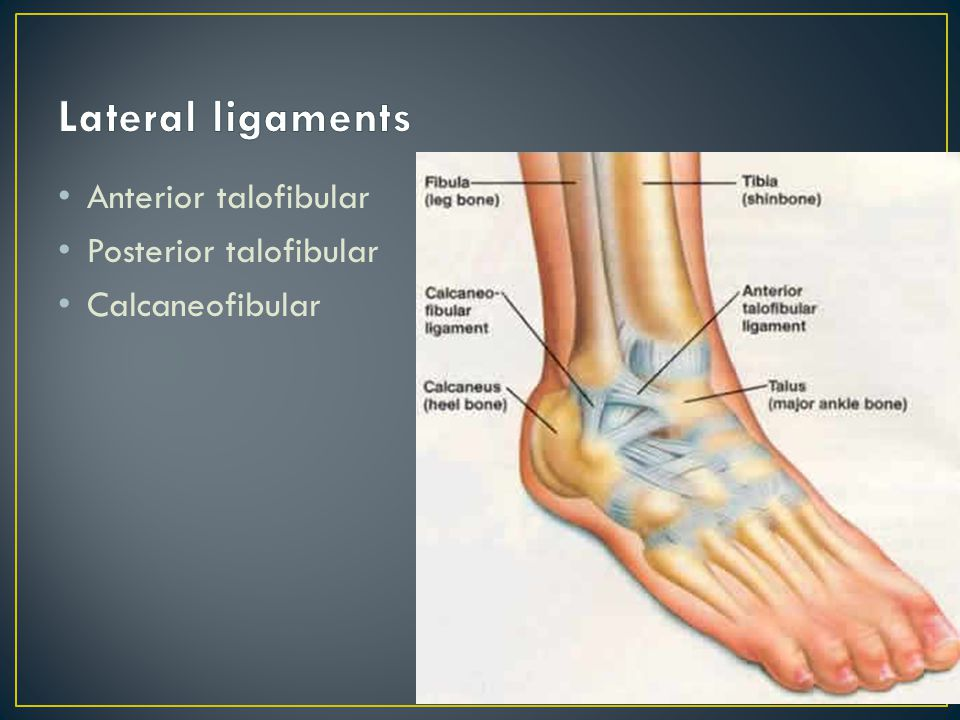 Lateral ligaments Anterior talofibular Posterior talofibular
