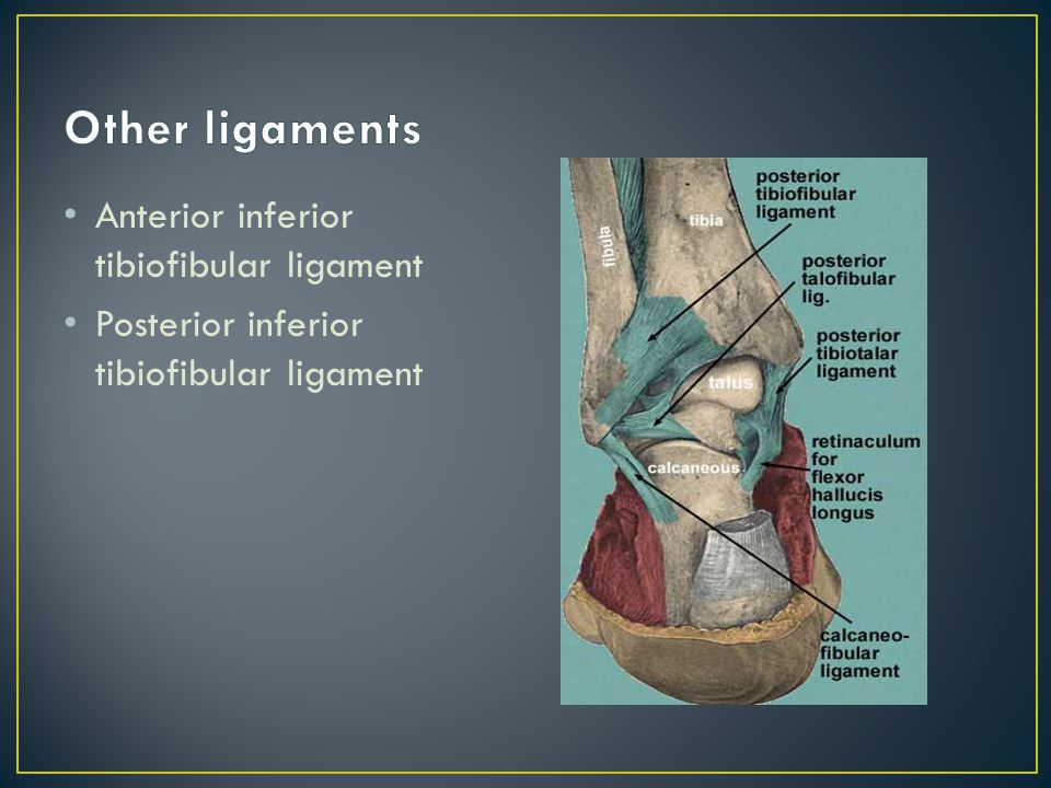 Other ligaments Anterior inferior tibiofibular ligament