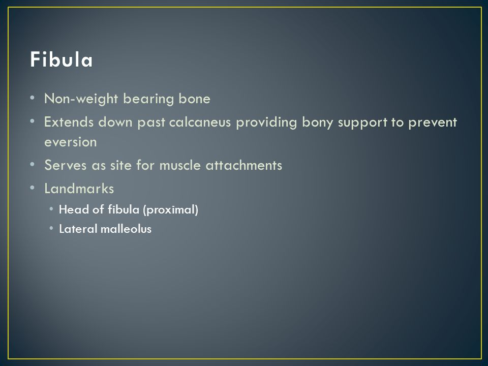 Fibula Non-weight bearing bone