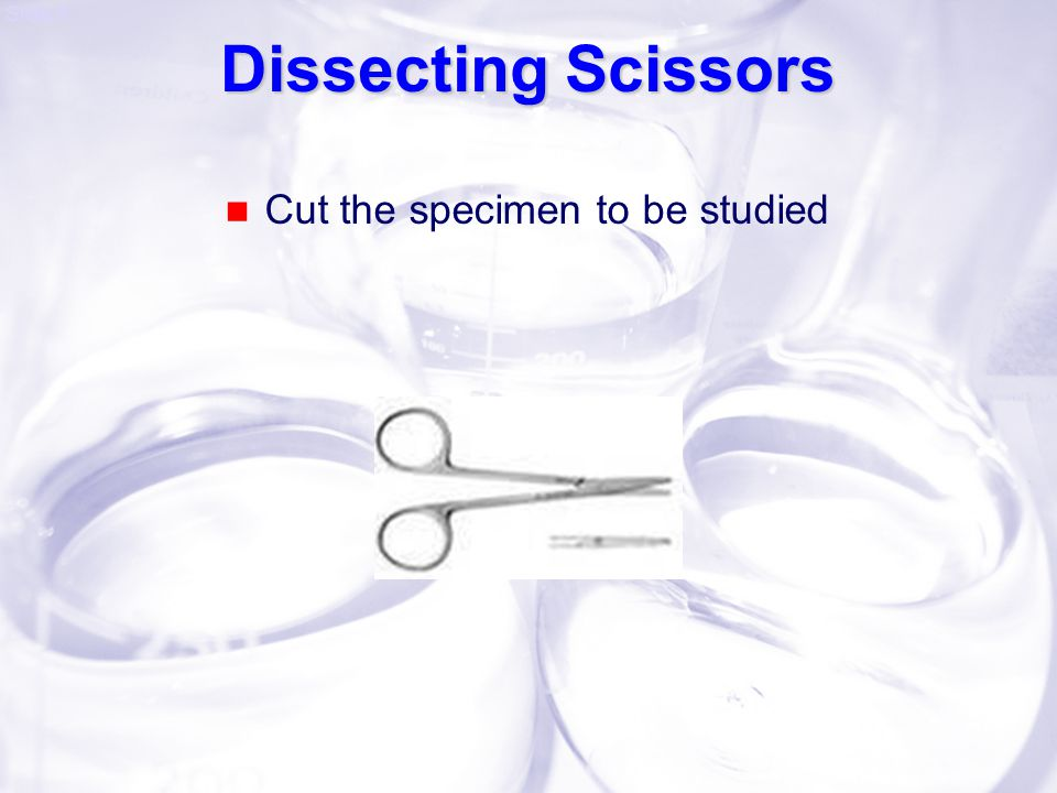 Dissecting Scissors Cut the specimen to be studied