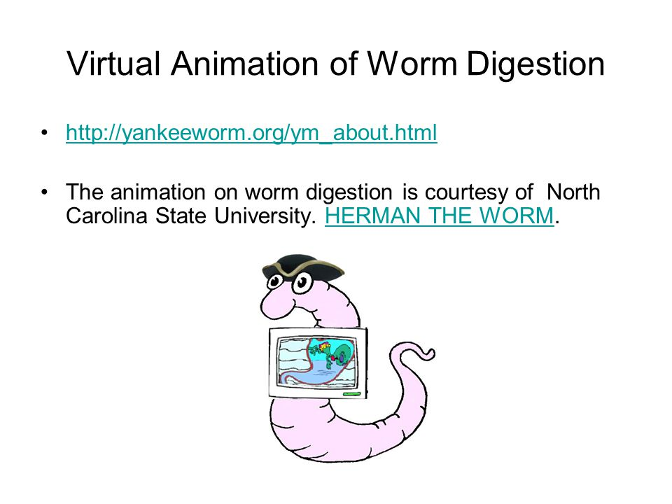 Virtual Animation of Worm Digestion
