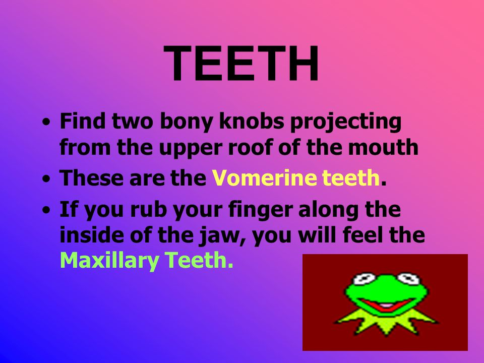 TEETH Find two bony knobs projecting from the upper roof of the mouth