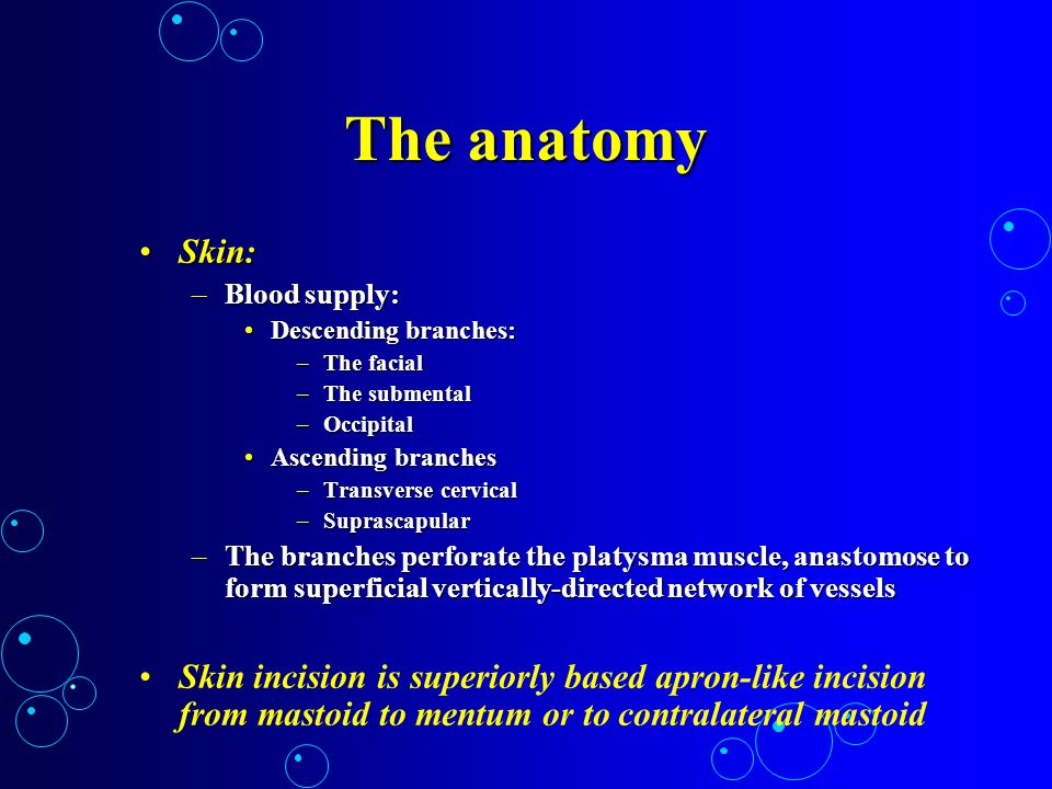 The anatomy Skin: Blood supply: Descending branches: The facial. The submental. Occipital. Ascending branches.