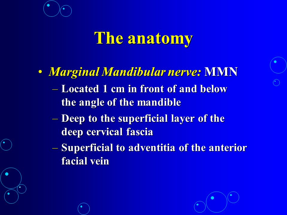 The anatomy Marginal Mandibular nerve: MMN
