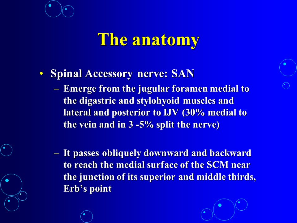 The anatomy Spinal Accessory nerve: SAN