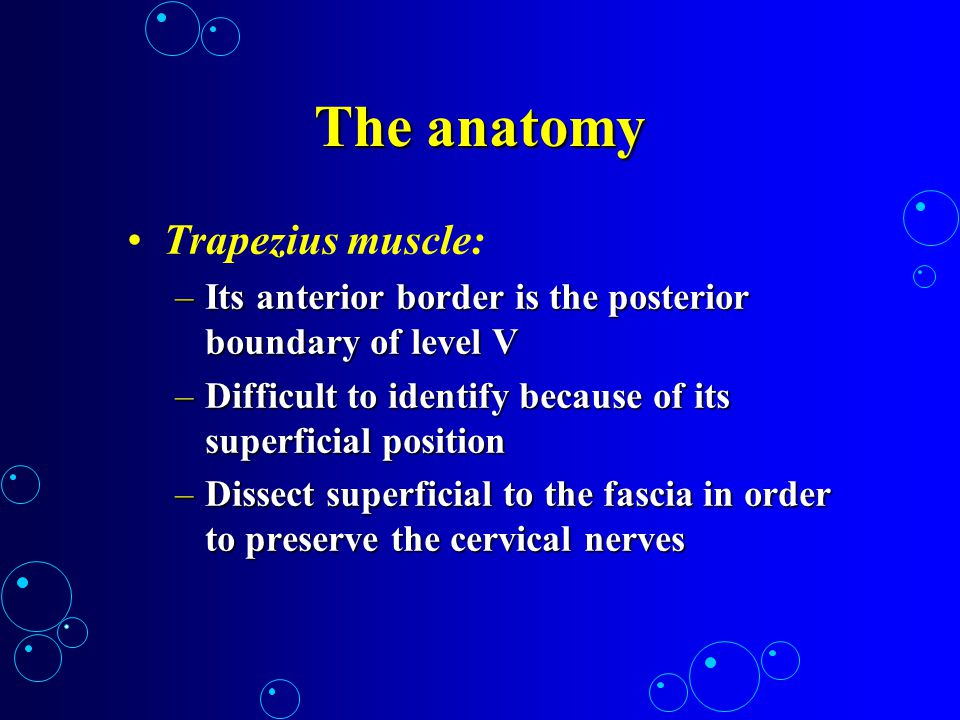 The anatomy Trapezius muscle: