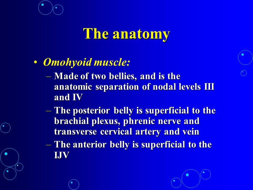The anatomy Omohyoid muscle: