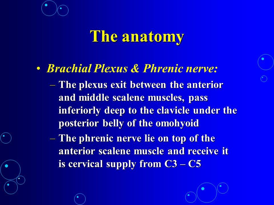 The anatomy Brachial Plexus & Phrenic nerve: