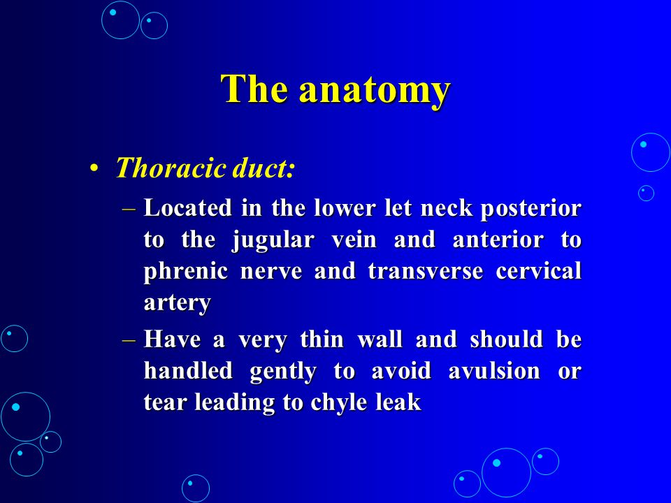 The anatomy Thoracic duct: