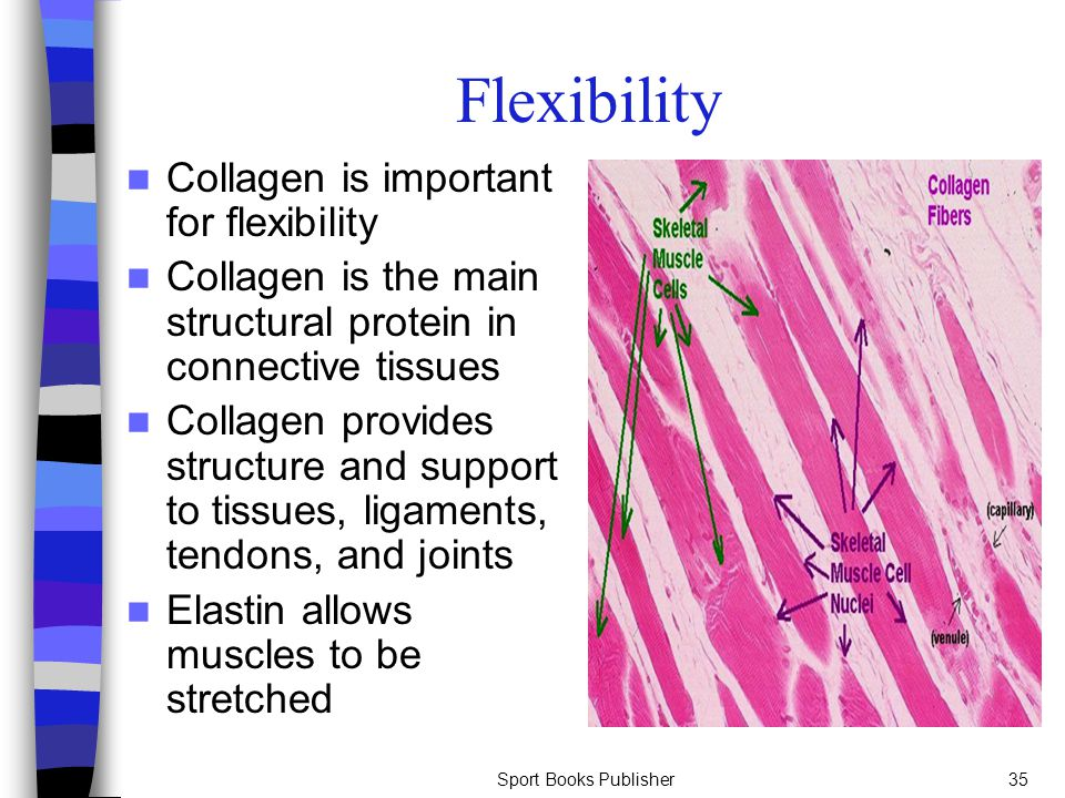 Flexibility Collagen is important for flexibility