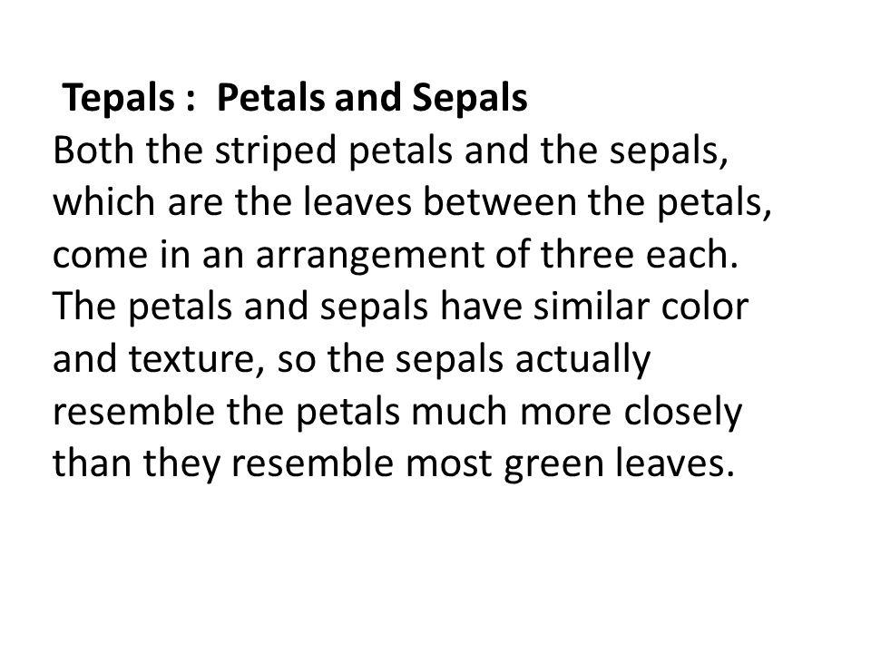 Tepals : Petals and Sepals