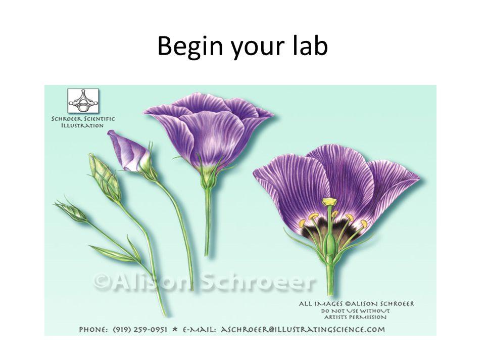 Begin your lab