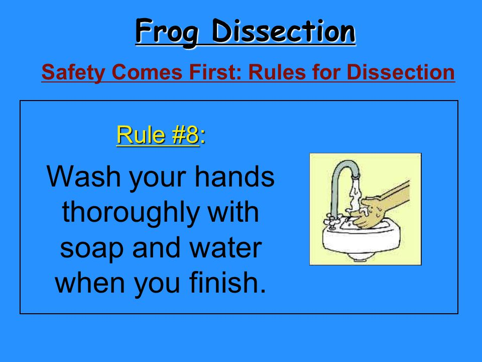 Frog Dissection Wash your hands thoroughly with soap and water
