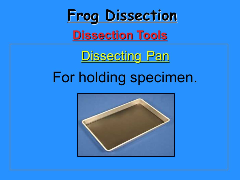 Frog Dissection Dissection Tools Dissecting Pan For holding specimen.