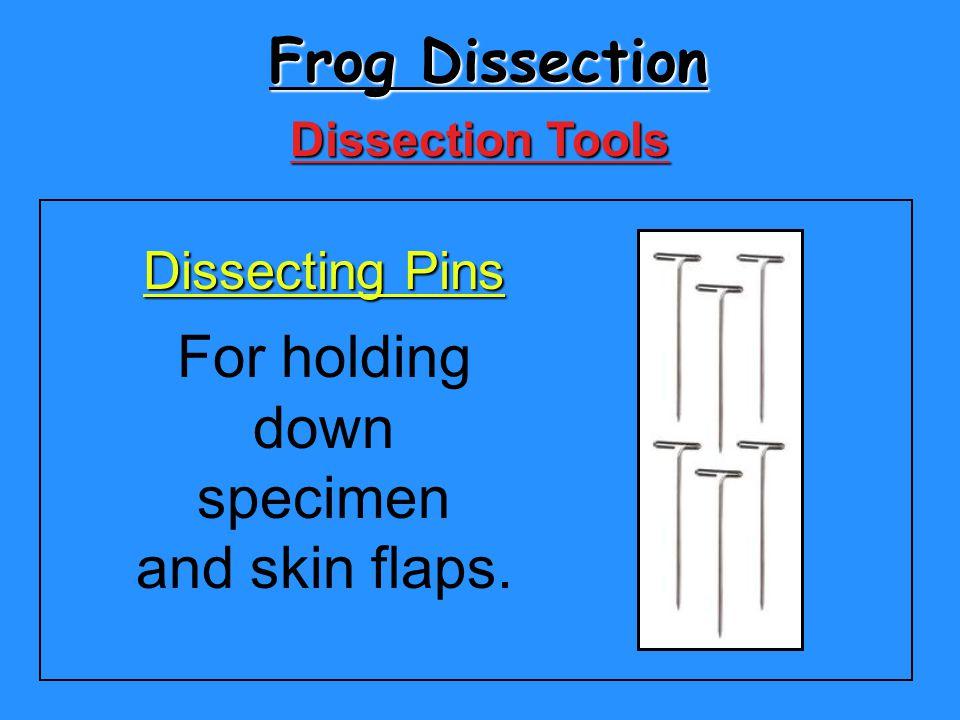 For holding down specimen