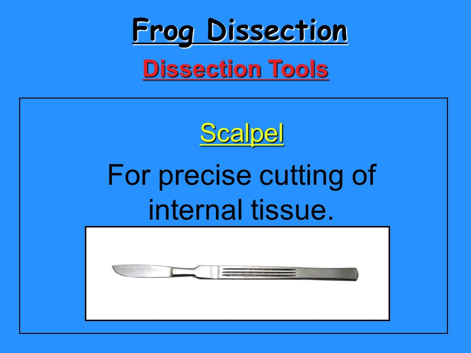 Frog Dissection For precise cutting of internal tissue. Scalpel