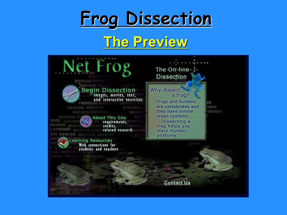 Frog Dissection The Preview