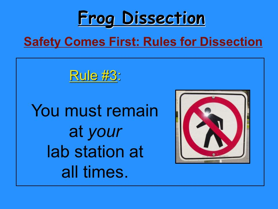 Frog Dissection You must remain at your lab station at all times.
