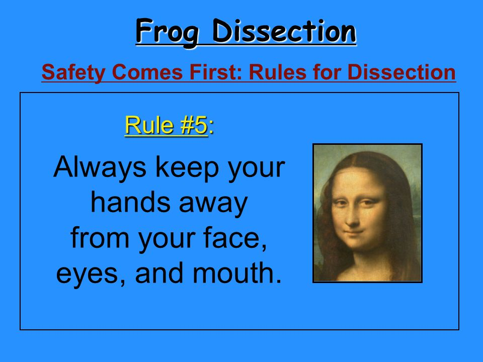 Frog Dissection Always keep your hands away from your face,