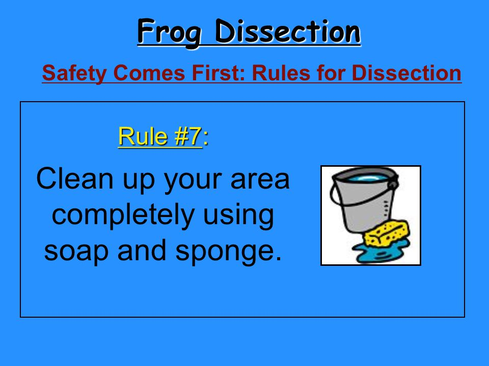 Frog Dissection Clean up your area completely using soap and sponge.