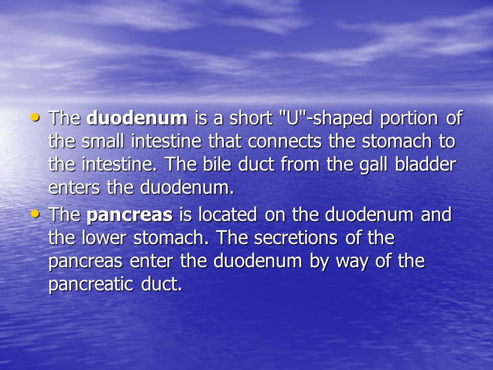 The duodenum is a short U -shaped portion of the small intestine that connects the stomach to the intestine. The bile duct from the gall bladder enters the duodenum.
