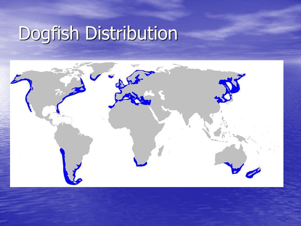 Dogfish Distribution
